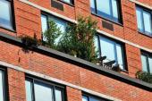 Balkónovkami ozdobíme i okna