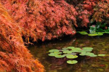 Jezírko čistíme na podzim až po opadu listí listnatých stromů