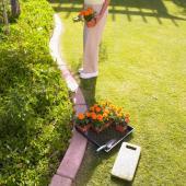 Vysazování okrasných rostlin na záhon