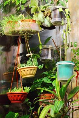 Rostliny v zavěšených mobilních nádobách
