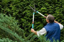 Nůžky pro střihání živých plotů