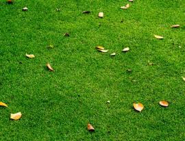 Listí na umělém trávníku