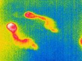 Co umí termokamery – tepelné stopy člověka na podlaze vydrží i několik desítek minut