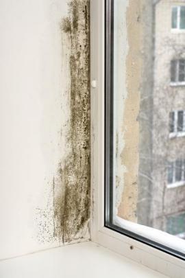 Plíseň v ostění okna, kde dochází kvůli tepelnému mostu ke kondenzaci vzdušné vlhkosti na chladném podkladu