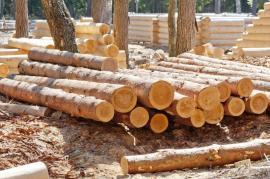 Vyschlé dřevo a stavba srubu v pozadí