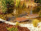 Příbřežní zóna zahradního jezírka