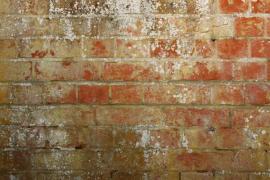 Zavlhčená zaplísněná stěna