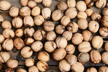 Sušení ořechů po sklizni