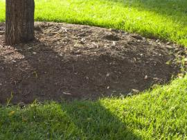 Kvalitní půda u kmene stromku