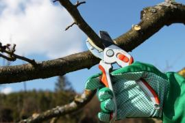 Na menší větve stačí zahradnické nůžky