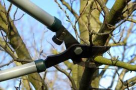 U silnějších větví si námahu ušetříme nůžkami pákovými