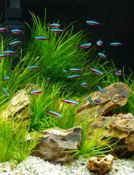 Rostliny jsou základem funkčního ekosystému v akváriu