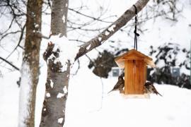 Ochrana ptactva na zahradě
