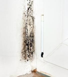 Černá plíseň v rohu místnosti