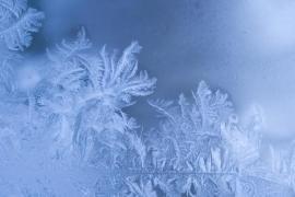 Pokud mrzne, vytvoří se na okenních sklech květinové kresby - kreslí mráz a jeho štětcem je kondenzující voda