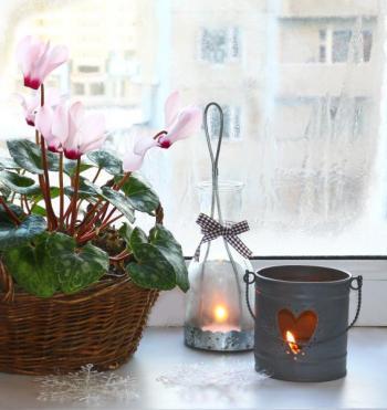 Některé pokojovky se nám i v zimě odvděčí květy - brambořík