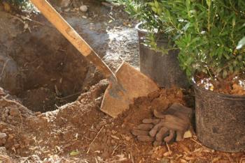 Výsadba keřů v kořenovém balu