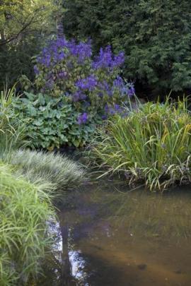 Okrasné trávy lemují doplňují zahradní jezírka