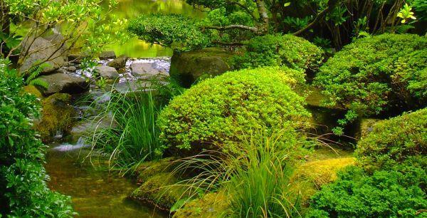 Okrasná tráva v japonské zahradě