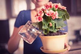 Hnojení roztokem