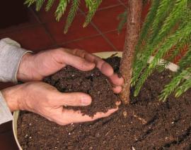 Hnojení granulemi