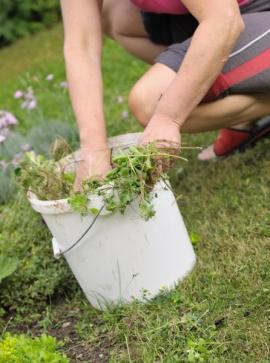 Platí - stále nejlepší způsob odstraňování plevele ze záhonů