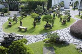 Japonská zahrada s bonsajemi