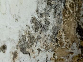 Důsledky vysoké vlhkosti ve stěnách