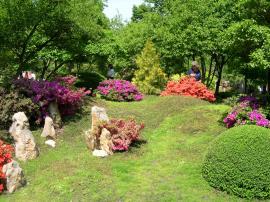 Zahrada s rododendrony