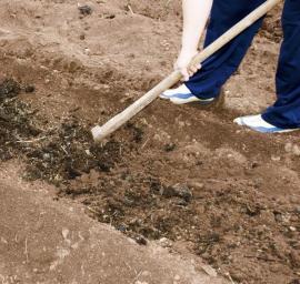 Základním organickým hnojivem je kvalitní kompost či rašelina
