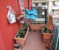 Zeleninová zahrada na balkónu - barevný staniol bude plašit ptáky