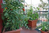 Zeleninová zahrada na stejném balkónu za několik měsíců