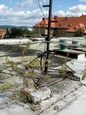 Když na ploché střeše již začínají růst stromy