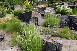 Přirozený skalnatý svah je pro skalku ideální, v opačném případě nezapomínáme při budování umělé skalky na drenáž