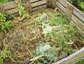 Lze použít i listy sklizené zeleniny - část na kompost, část do jíchy určené k hnojení další zeleniny