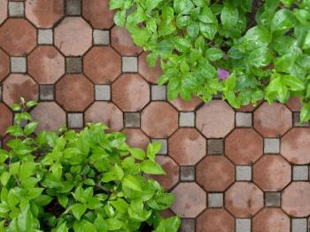 Zámková dlažba - současná klasika, na výběr je ale mnoho typů betonových venkovních dlaždic a zrovna tyto působí velmi pěkně, strohost rovného povrchu je navíc porušena přesahy rostlin přes okraj chodníčku, vhodné je též použití mobilních nádob s ros