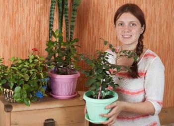 Zdravé a vitální pokojové rostliny