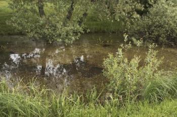 Zkažená voda v jezírku