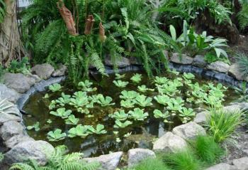Stín je pro zahradní jezírka velmi důležitý