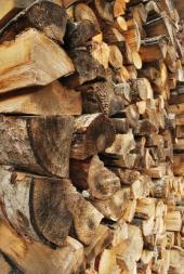 Březové dřevo