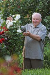 Bohatá úroda květů růží