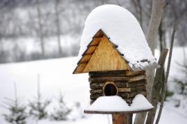 Ptačí budka - vyčištěná se stane i zimním úkrytem ptáků