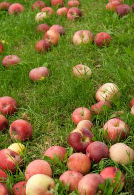 Spadaná jablka