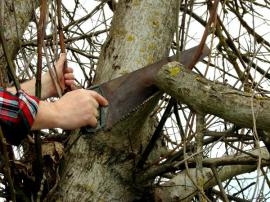 Odstraňování přesahující větve