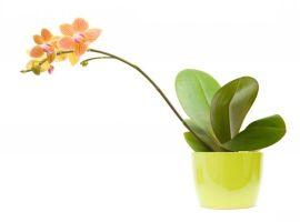 Orchidej s nádhernými květy