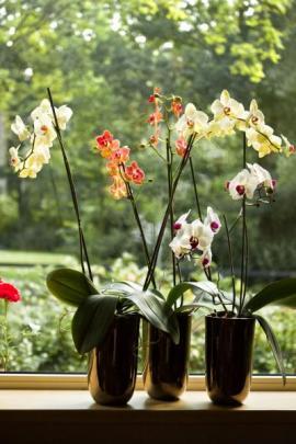 Orchideje z řádu Asparagales