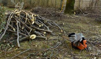 Dřevo z pokáceného stromu využijeme - to ovocné je vyschlé ideální k uzení