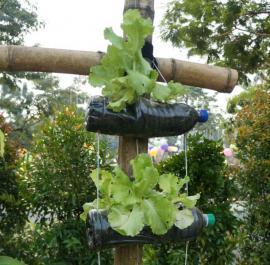 PET pěstování salátu