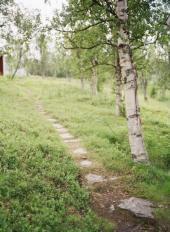 Bříza to má u nás těžké - podle lesníků a zahradníků jde o plevel, podle bylinkářů o úžasnou léčivku a přitom je velmi ceněno její palivové dřevo (byť plevelné :-)