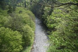 Řeka Oslava u hradu Lamberk, autor: Jiří Sedláček CC 4.0 Unported